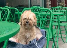 Dog Restaurant Week - Focus