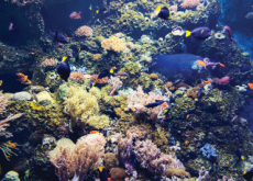 Fish Return to Coral Reefs Thanks to Loudspeakers - Science