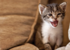 Cats Express Emotions on Their Faces, Too! - Science