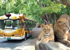 Everland's Safari Bus Retires - National News
