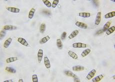 Mushrooms That Eat Plastic - Science