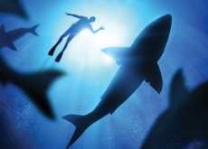 Australia Makes a New Name for Shark Attacks - Science