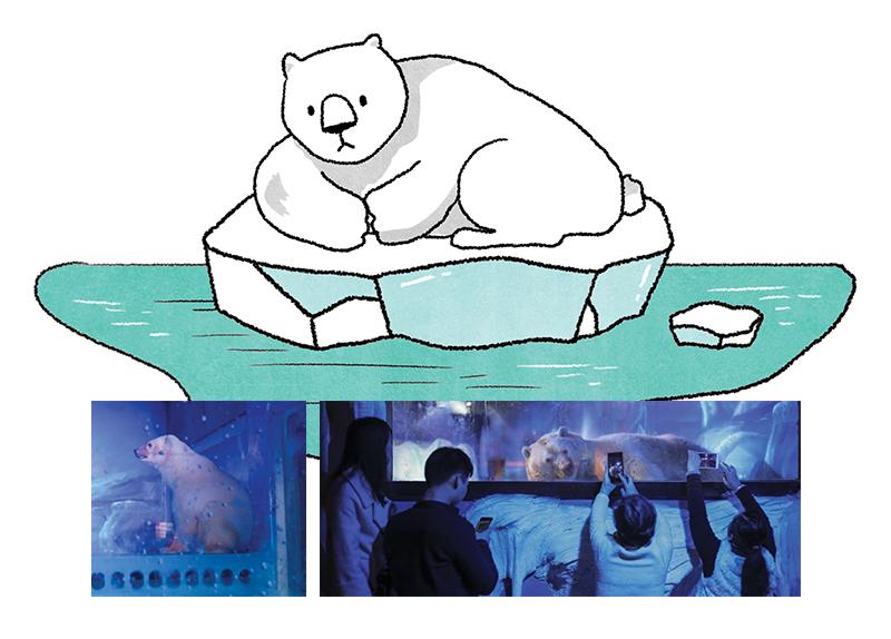 The World's Poorest Polar Bear