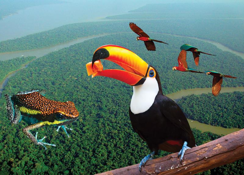 Brazil's Amazon Rainforest
