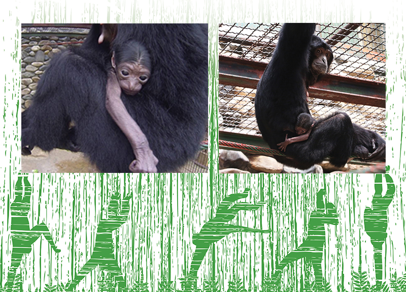 Welcome to Korea, Baby Siamang0