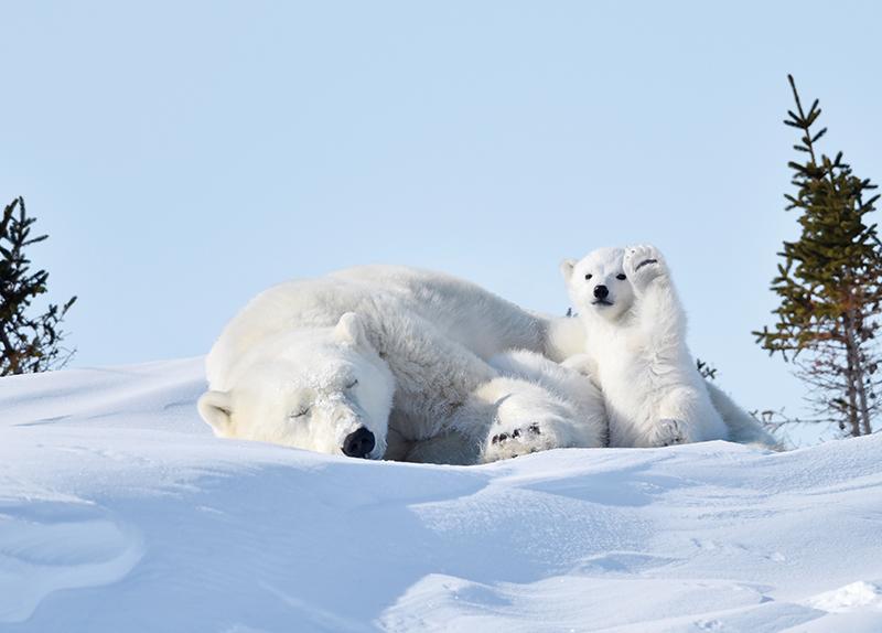 Hi, Polar Bear / Funny Spider-Man 0