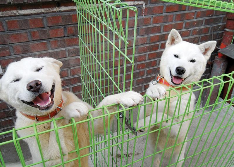Pungsan Dog Village0