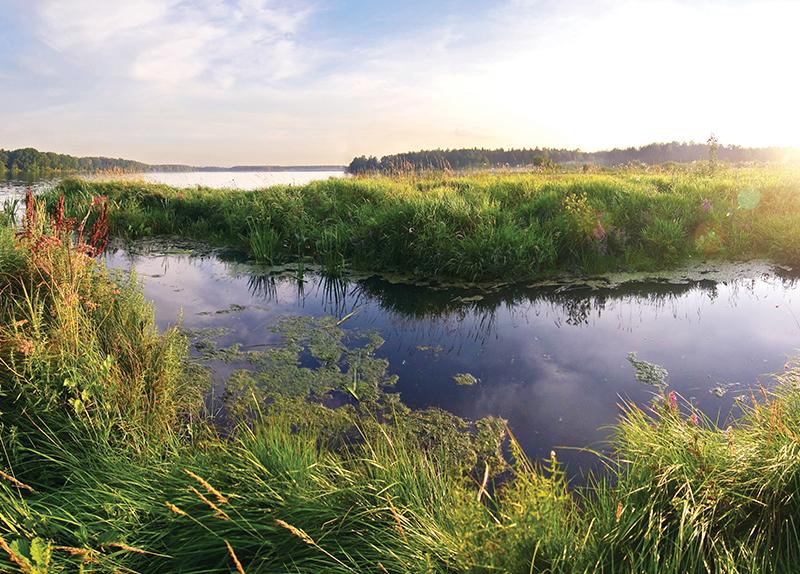 Precious Wetlands0