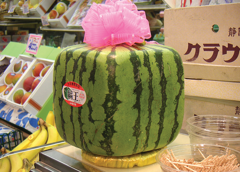 Square Watermelons Grows In Popularity