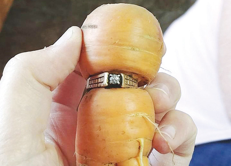 Long-Lost Engagement Ring Found0