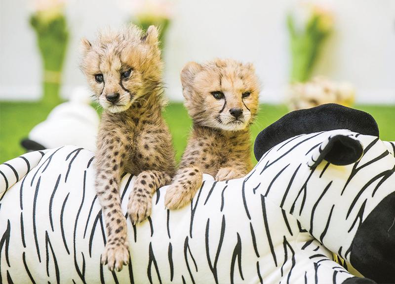 Baby Animals Are Here!0