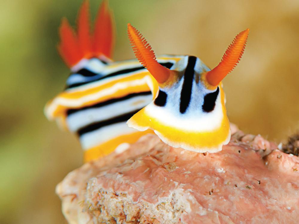 A Photosynthetic Animal0