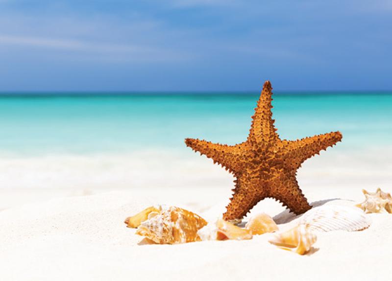 Characteristics Of Starfish