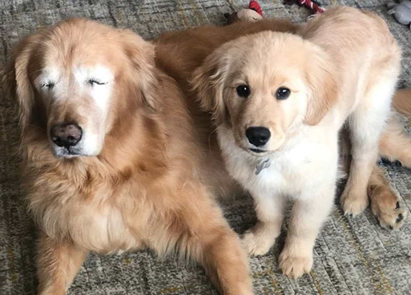 A Puppy Duo