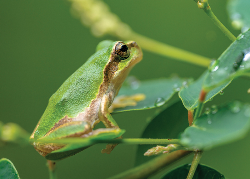 Characteristics Of Frogs