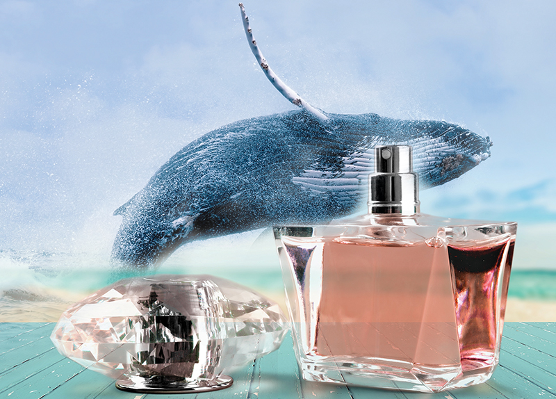 Sperm Whales' Excretions in Perfumes