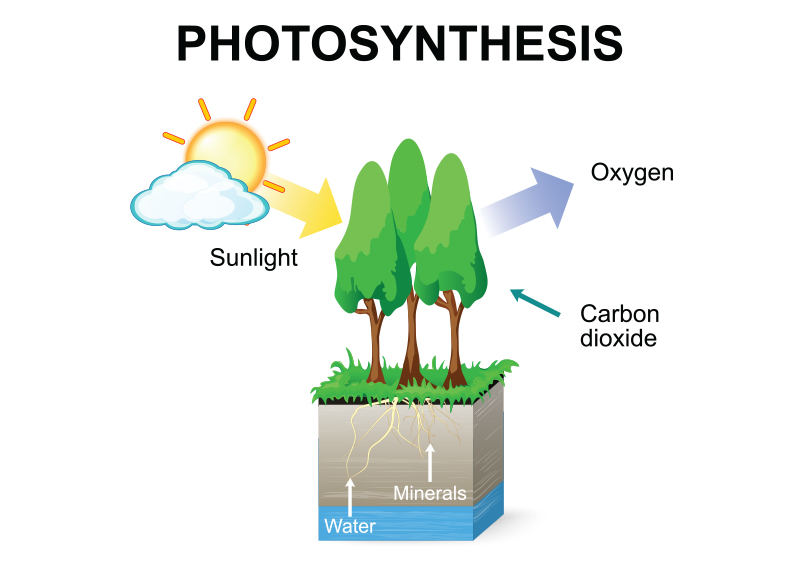 Why Do We Need Photosynthesis?0