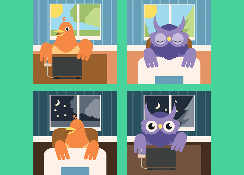 The Brains of Morning and Night People Differ0