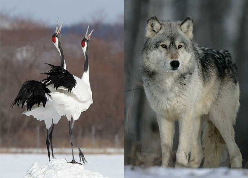 Endangered Species0