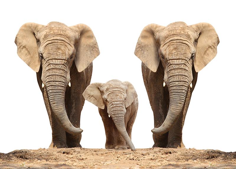 Zoo Elephants To Be Released Into Kenyan Wild0