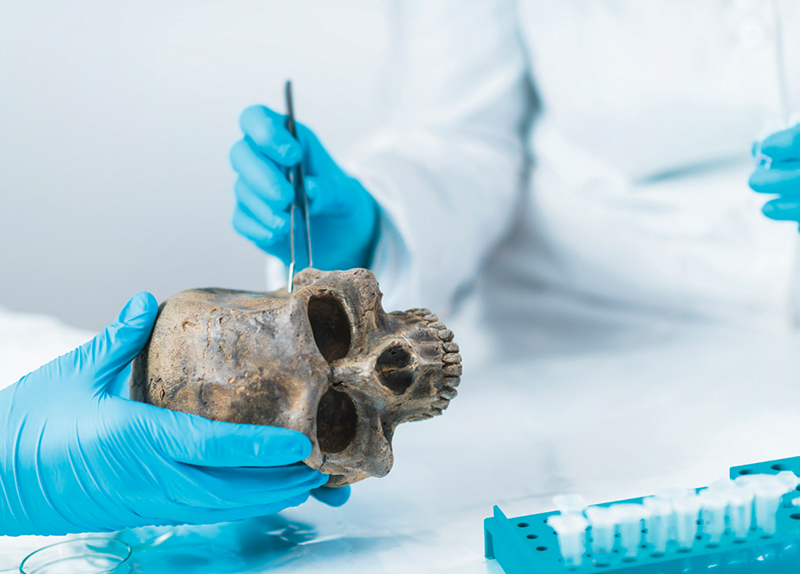 Prehistoric Teen's DNA Sheds Light On Sulawesi's Mysterious Lost Culture6