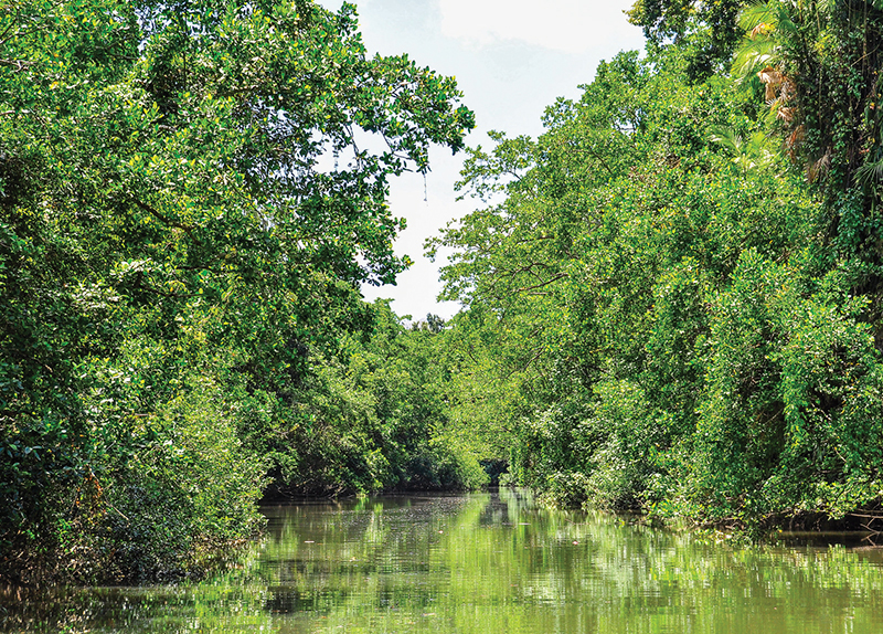 World's Oldest Tropical Forest Is Returned to Indigenous Owners0
