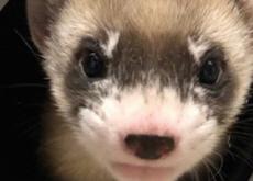 Is Animal Cloning Ethical? - Debate