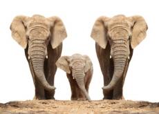 Zoo Elephants To Be Released Into Kenyan Wild - Headline News