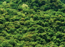 The Importance of Forests - Science