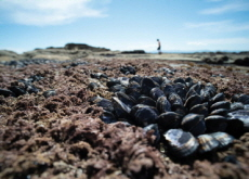 Summer Heat Cooks Clams and Mussels in Canada - World News I