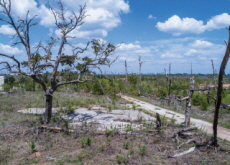 Tree Loss in the U.S. Continues - World News I
