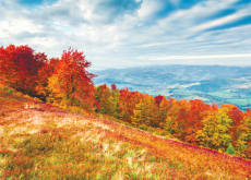 Autumn Has Its Colors - Special Report