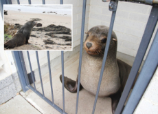 Slumbering Seal - World News I
