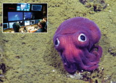 The World's Most Famous Squid! - World News I