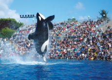SeaWorld Ends Killer Whale Show - Focus