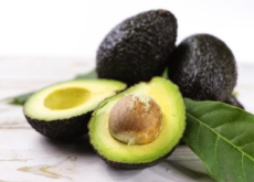 A Solution To The Avocado Shortage? - Science