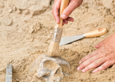 Why Study Archaeology? - Culture/Trend