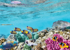 The Great Barrier Reef Faces Its Sixth Near-Death Experience - Science