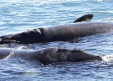 Hermanus Whale Festival - In Spotlight
