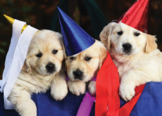 National Puppy Day - Korea & World Past