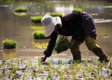 Farming Population Shrinking in Korea - National News II