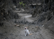 The Lonely Cat - Photo News