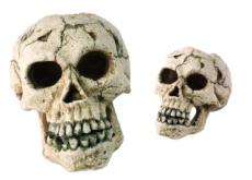 Ancient Skulls Show America Was a Prehistoric Melting Pot - Special Report