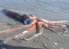 Giant Squid Washes Up on South African Beach - World News I