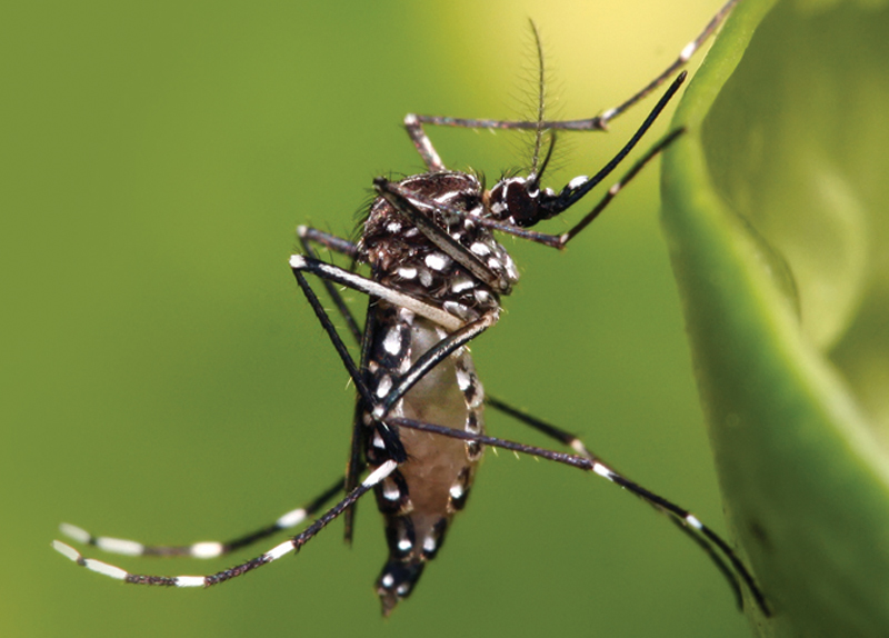 Korea Increases Zika Prevention Efforts
