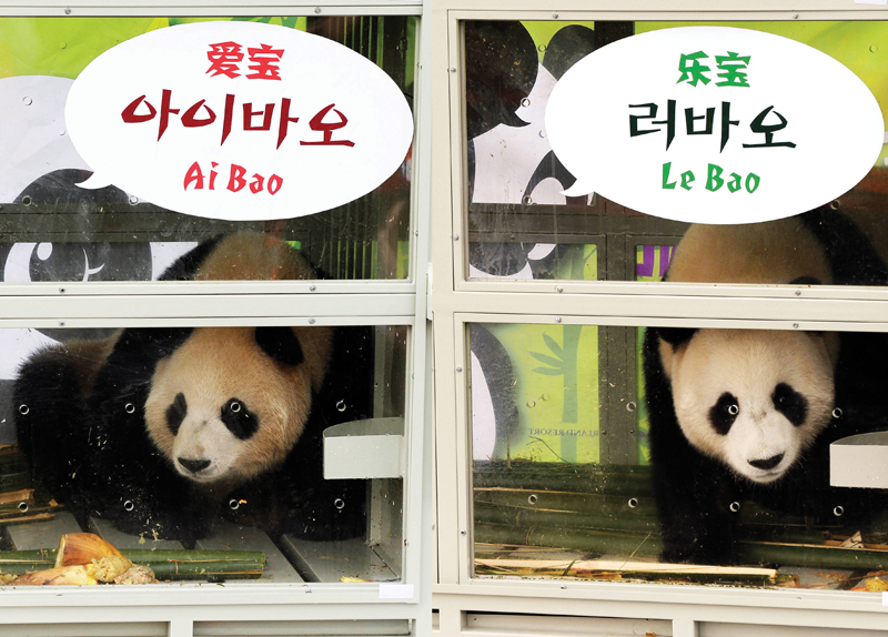 Panda couple arrives in Korea0