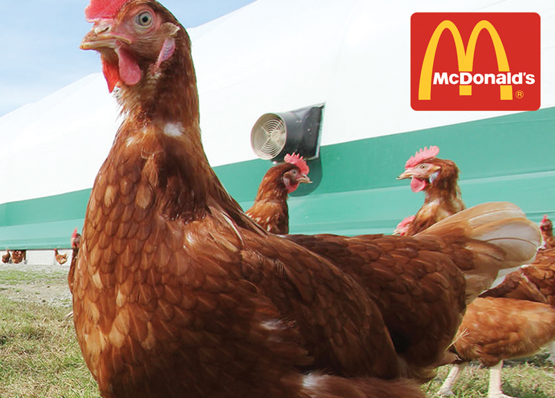 McDonald's to Become Cage-Free by 2025