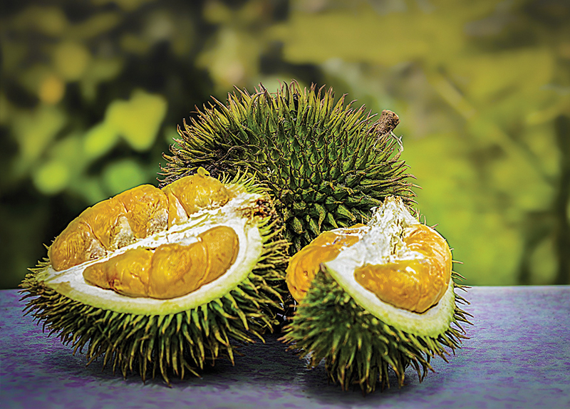 Plane Grounded Over Durian Furor0