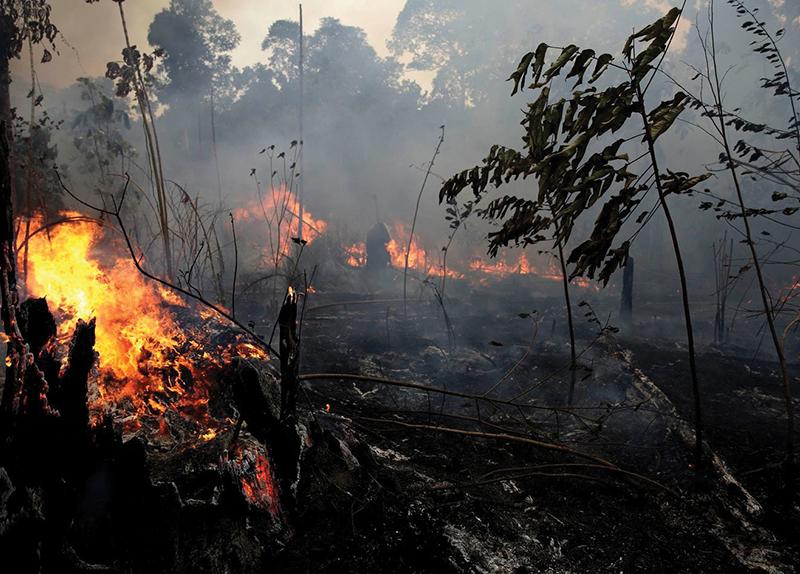 Amazon Rainforest in Flames0