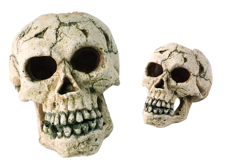 Ancient Skulls Show America Was a Prehistoric Melting Pot0